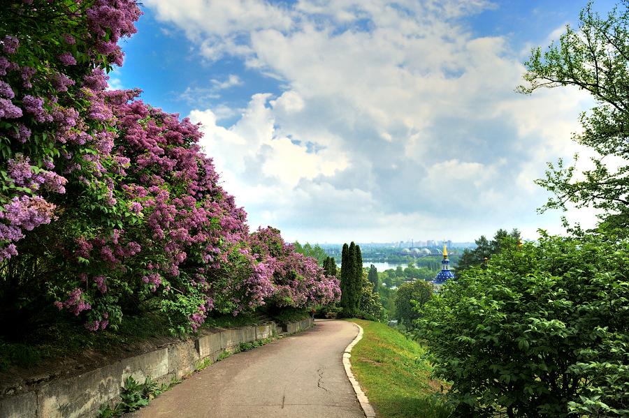 Цветение сирени в Киевском ботаническом саду.jpg